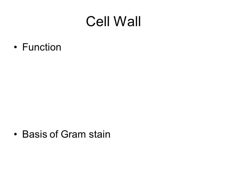 Cell Wall Function Basis of Gram stain