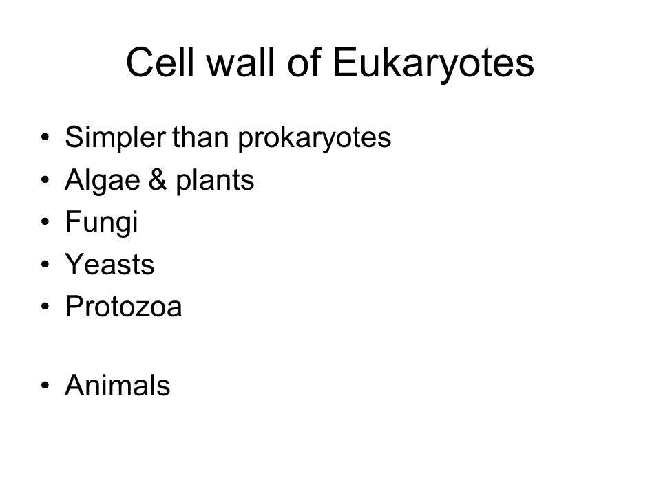 Cell wall of Eukaryotes Simpler than prokaryotes Algae & plants Fungi Yeasts Protozoa Animals