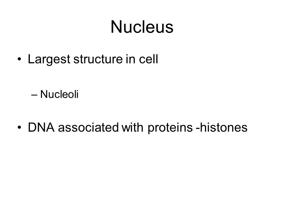 Nucleus Largest structure in cell –Nucleoli DNA associated with proteins -histones