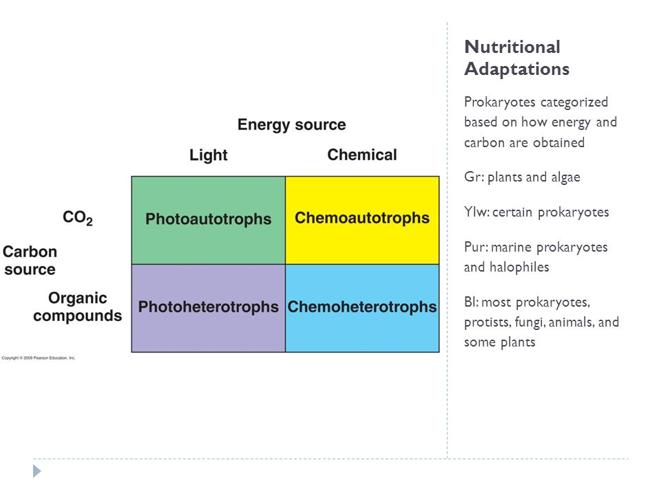 Nutritional Adaptations Prokaryotes categorized based on how energy and carbon are obtained Gr: plants and algae Ylw: certain prokaryotes Pur: marine prokaryotes and halophiles Bl: most prokaryotes, protists, fungi, animals, and some plants