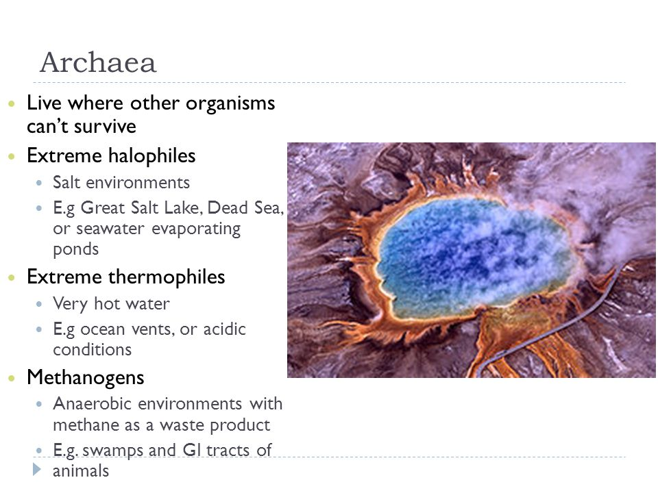 Archaea Live where other organisms can't survive Extreme halophiles Salt environments E.g Great Salt Lake, Dead Sea, or seawater evaporating ponds Ext