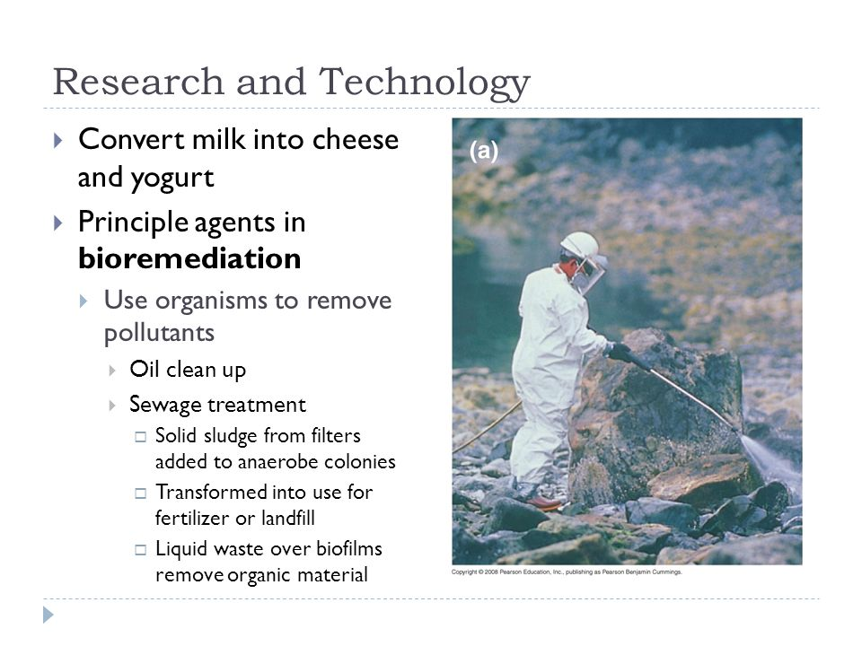 Research and Technology  Convert milk into cheese and yogurt  Principle agents in bioremediation  Use organisms to remove pollutants  Oil clean up  Sewage treatment  Solid sludge from filters added to anaerobe colonies  Transformed into use for fertilizer or landfill  Liquid waste over biofilms remove organic material