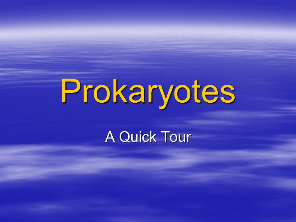 Prokaryotes A Quick Tour