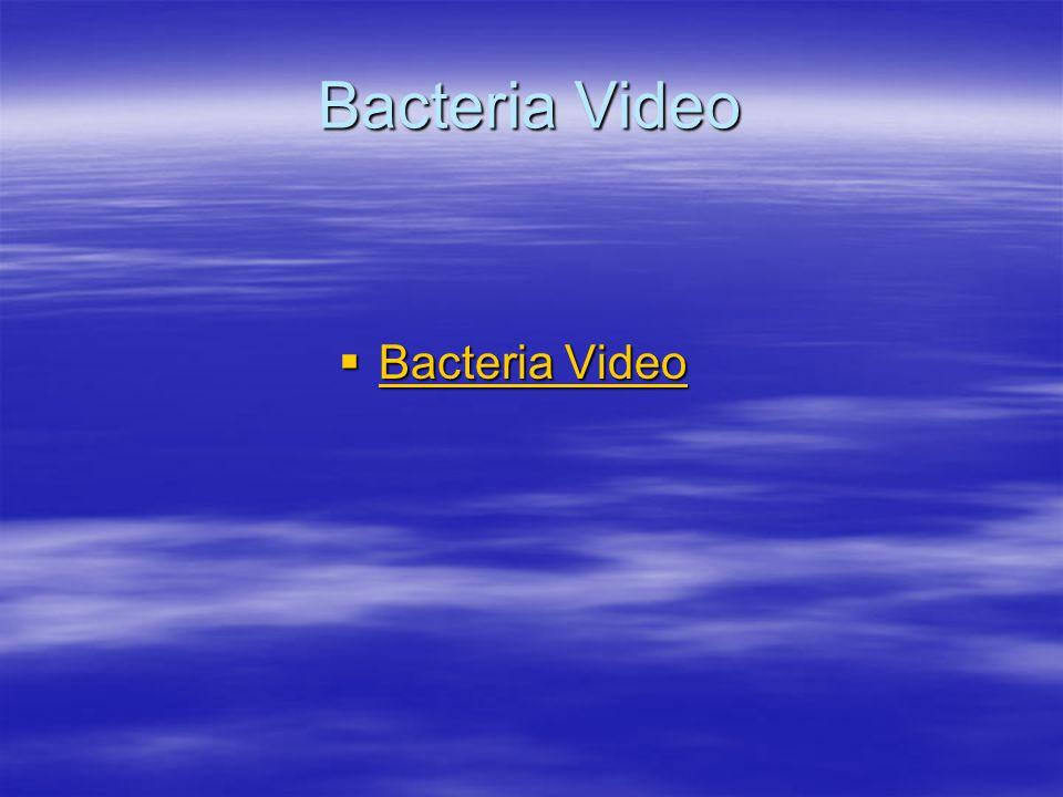 Bacteria Video  Bacteria Video Bacteria Video Bacteria Video