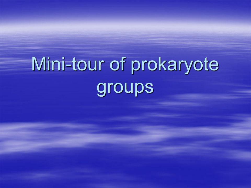 Mini-tour of prokaryote groups