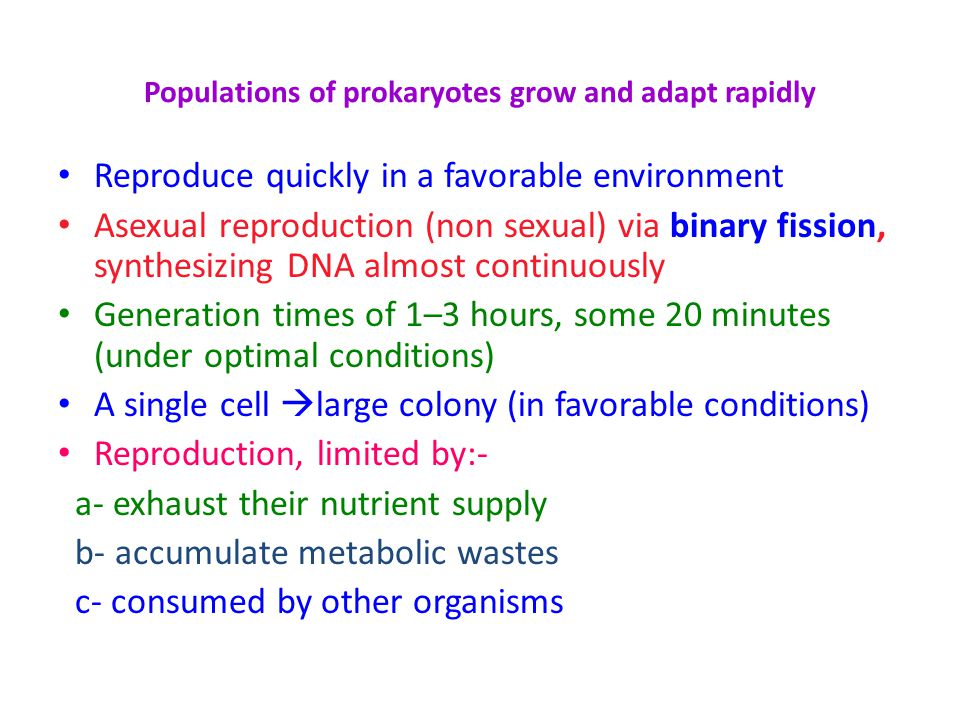 Populations of prokaryotes grow and adapt rapidly Reproduce quickly in a favorable environment Asexual reproduction (non sexual) via binary fission, s