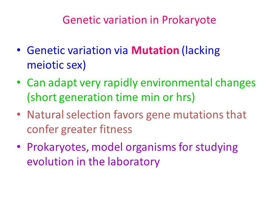 Genetic variation in Prokaryote Genetic variation via Mutation (lacking meiotic sex) Can adapt very rapidly environmental changes (short generation ti