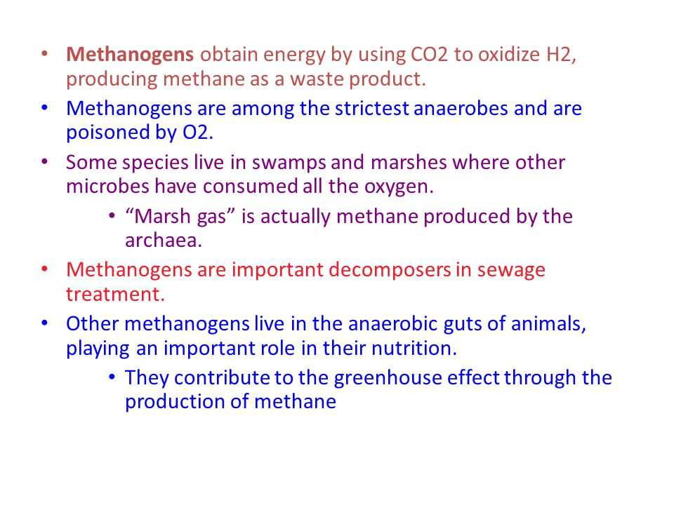 Methanogens obtain energy by using CO2 to oxidize H2, producing methane as a waste product. Methanogens are among the strictest anaerobes and are pois
