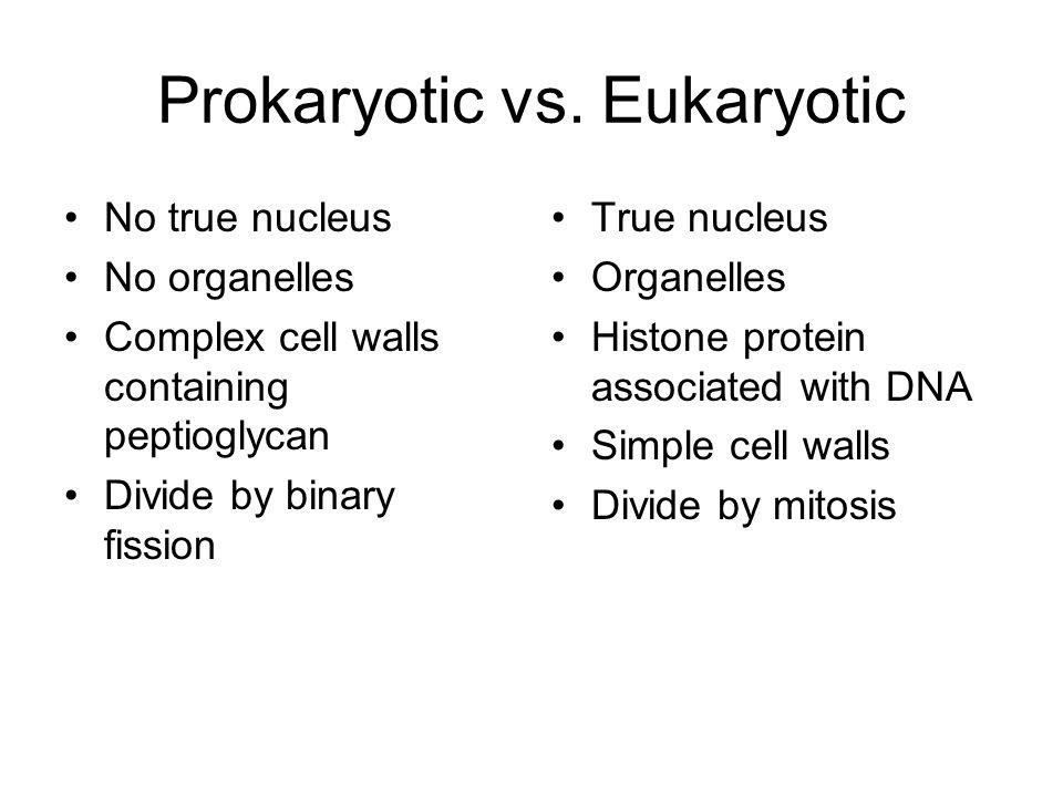 Prokaryotic vs. Eukaryotic No true nucleus No organelles Complex cell walls containing peptioglycan Divide by binary fission True nucleus Organelles H