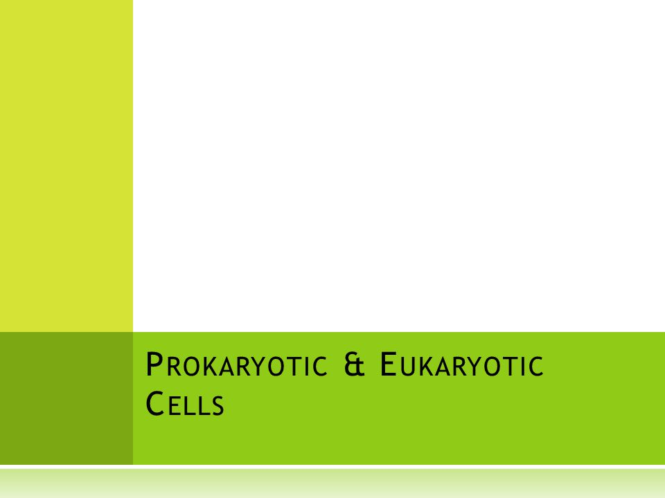 P ROKARYOTIC & E UKARYOTIC C ELLS