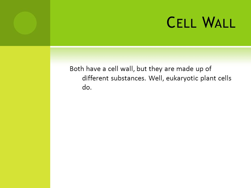C ELL W ALL Both have a cell wall, but they are made up of different substances.