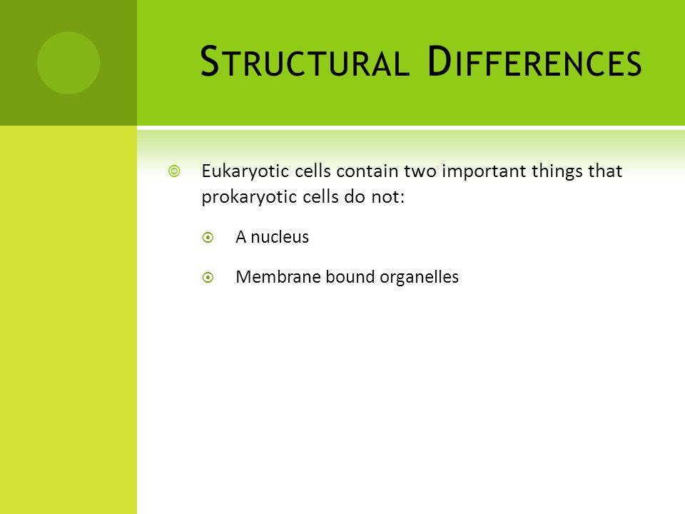 S TRUCTURAL D IFFERENCES  Eukaryotic cells contain two important things that prokaryotic cells do not:  A nucleus  Membrane bound organelles