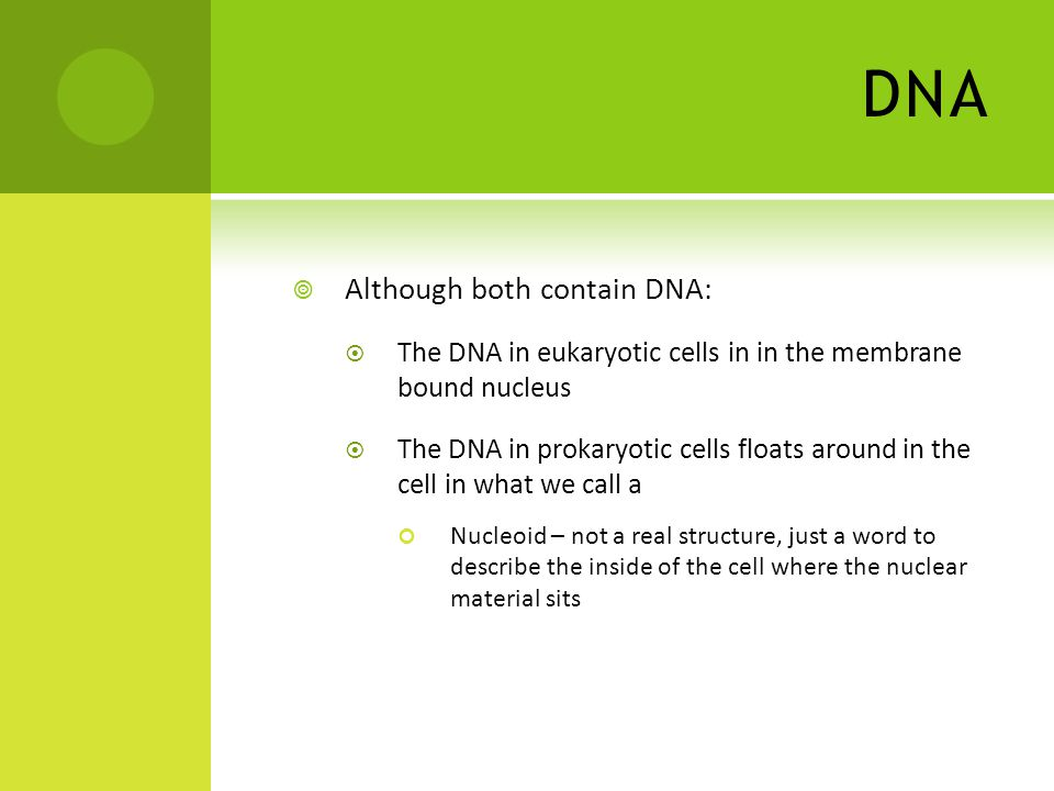 DNA  Although both contain DNA:  The DNA in eukaryotic cells in in the membrane bound nucleus  The DNA in prokaryotic cells floats around in the cell in what we call a Nucleoid – not a real structure, just a word to describe the inside of the cell where the nuclear material sits