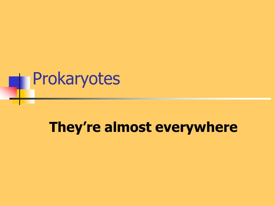 Prokaryotes They're almost everywhere