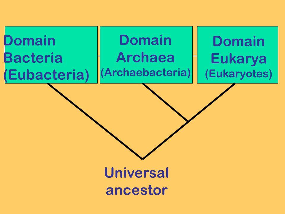 Domain Bacteria (Eubacteria) Domain Archaea (Archaebacteria) Domain Eukarya (Eukaryotes) Universal ancestor
