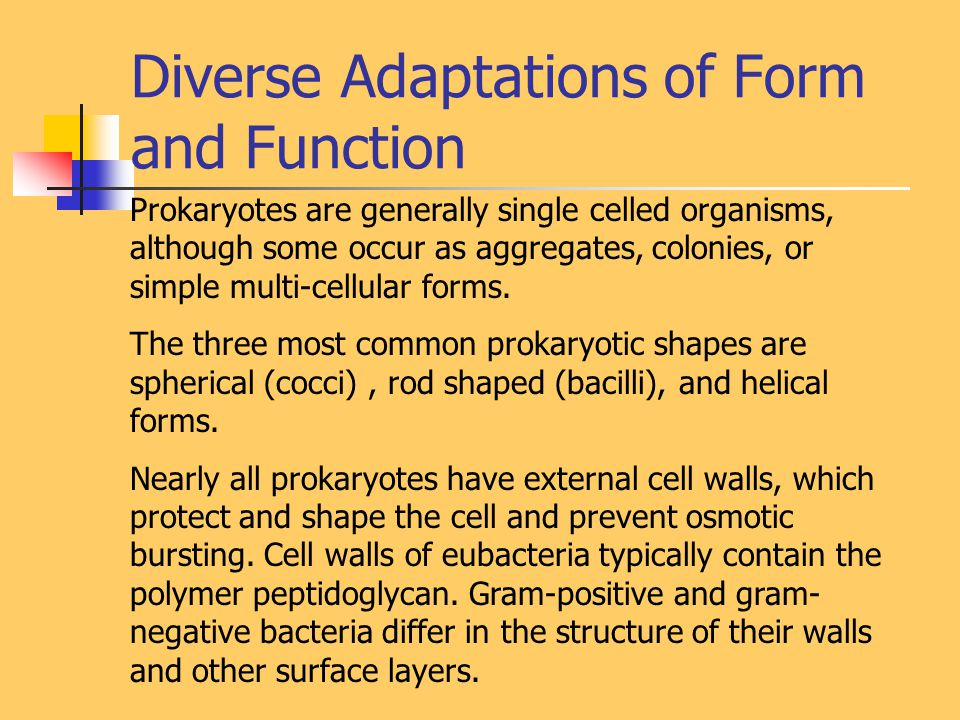 Diverse Adaptations of Form and Function Prokaryotes are generally single celled organisms, although some occur as aggregates, colonies, or simple multi-cellular forms.