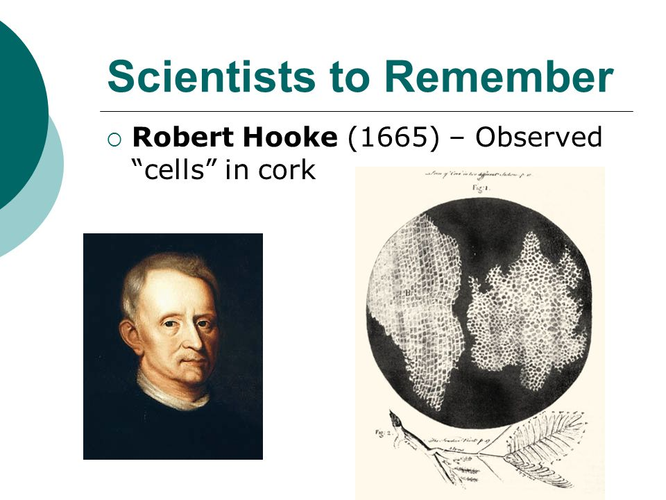 """Scientists to Remember  Robert Hooke (1665) – Observed """"cells"""" in cork"""