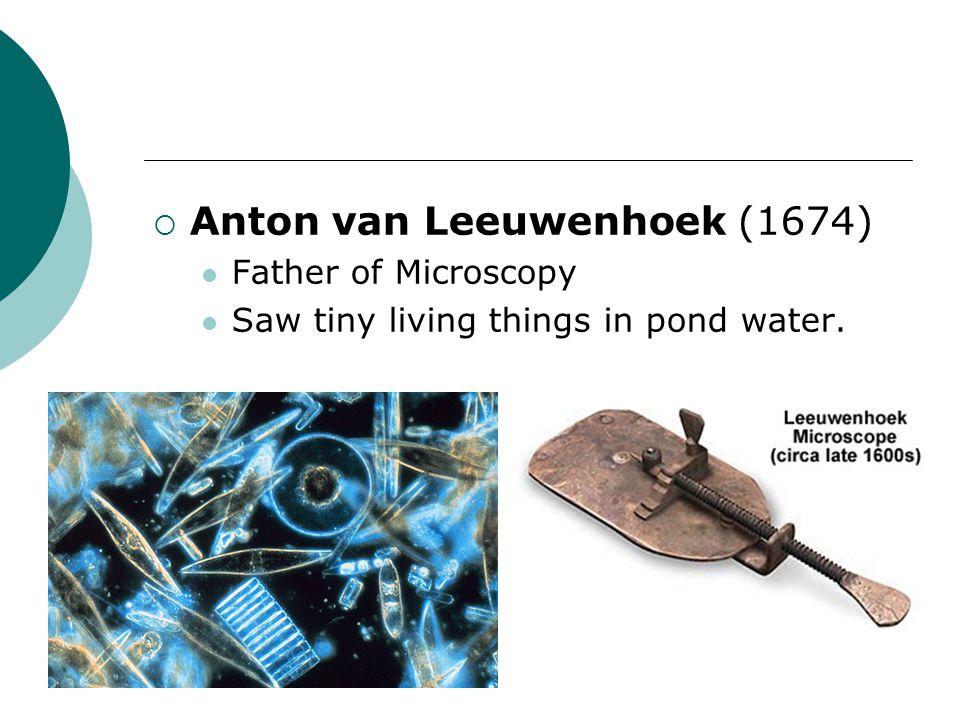  Anton van Leeuwenhoek (1674) Father of Microscopy Saw tiny living things in pond water.