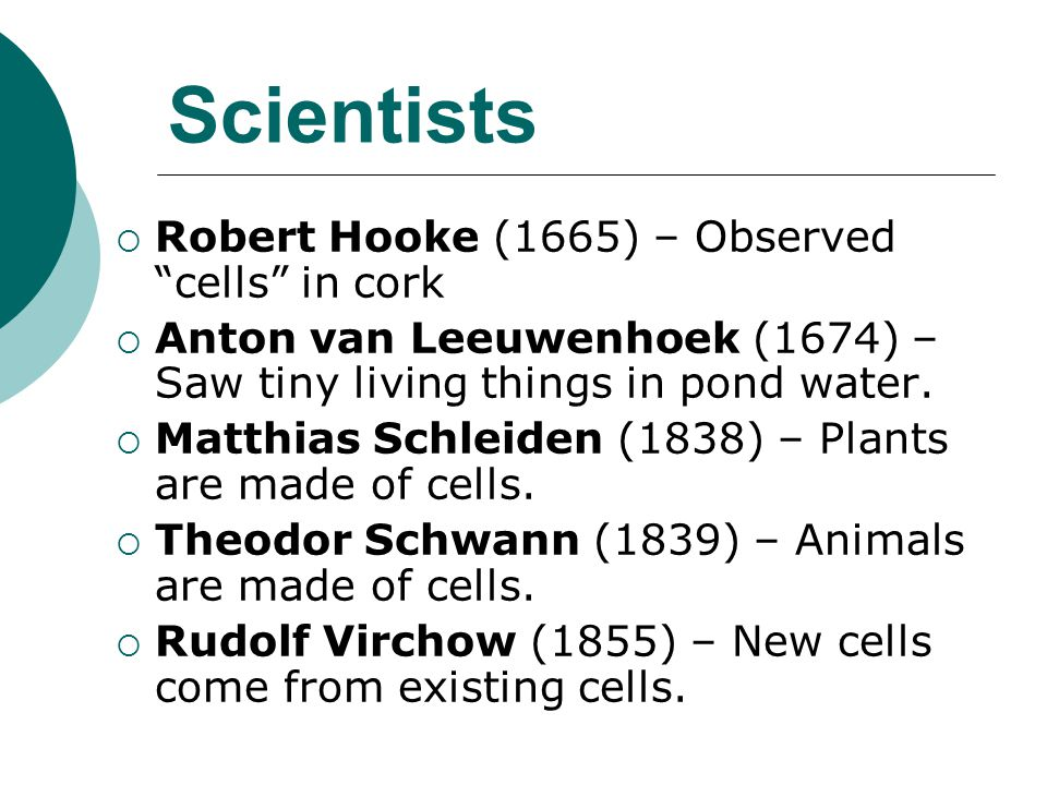 """Scientists  Robert Hooke (1665) – Observed """"cells"""" in cork  Anton van Leeuwenhoek (1674) – Saw tiny living things in pond water.  Matthias Schleide"""