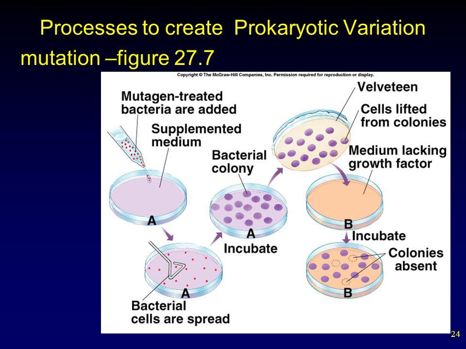 24 Processes to create Prokaryotic Variation mutation –figure 27.7