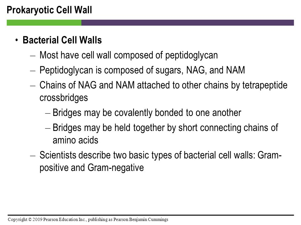 Copyright © 2009 Pearson Education Inc., publishing as Pearson Benjamin Cummings Prokaryotic Cell Wall Bacterial Cell Walls – Most have cell wall comp