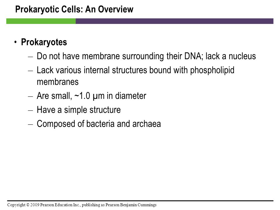 Copyright © 2009 Pearson Education Inc., publishing as Pearson Benjamin Cummings Prokaryotic Cell Walls [INSERT FIGURE 3.14a]
