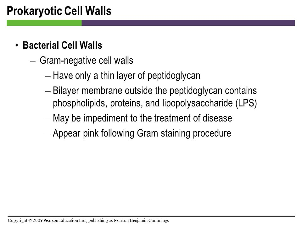 Copyright © 2009 Pearson Education Inc., publishing as Pearson Benjamin Cummings Prokaryotic Cell Walls Bacterial Cell Walls – Gram-negative cell wall