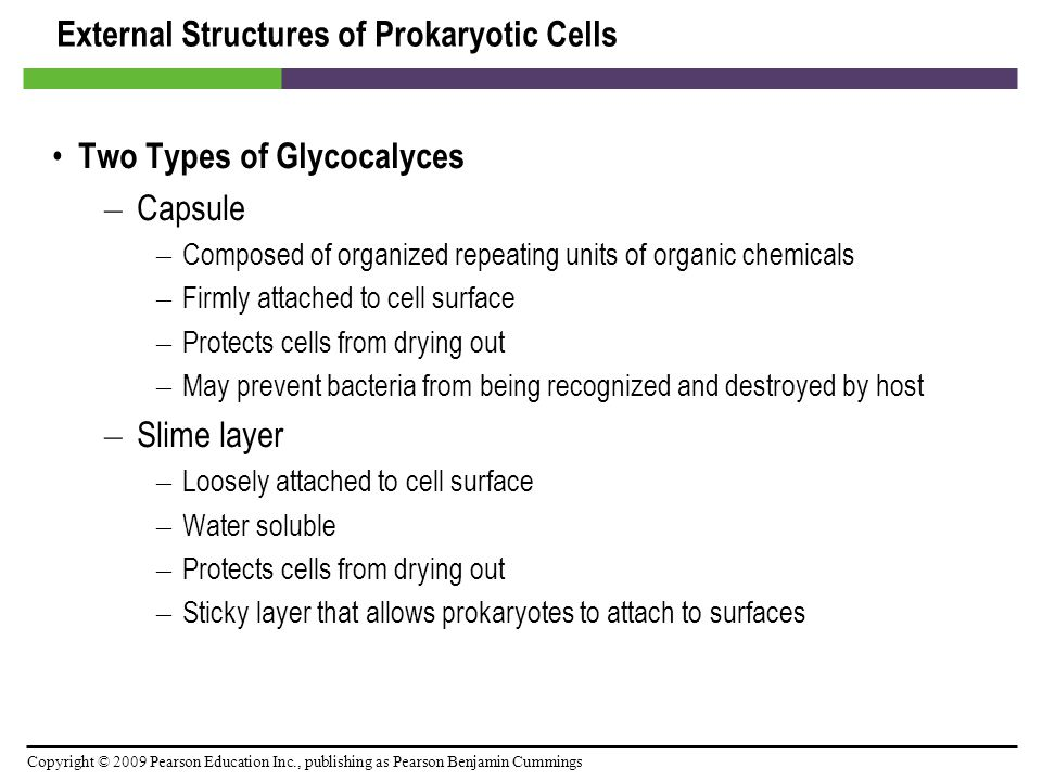 Copyright © 2009 Pearson Education Inc., publishing as Pearson Benjamin Cummings External Structures of Prokaryotic Cells Two Types of Glycocalyces –