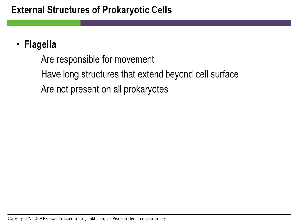 Copyright © 2009 Pearson Education Inc., publishing as Pearson Benjamin Cummings Prokaryotic Cell Walls Provide structure and shape and protect cell from osmotic forces Assist some cells in attaching to other cells or in eluding antimicrobial drugs Not present in animal cells, so can target cell wall of bacteria with antibiotics Bacteria and archaea have different cell wall chemistry