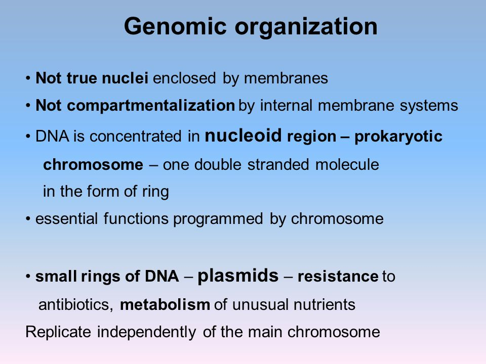 Genomic organization Not true nuclei enclosed by membranes Not compartmentalization by internal membrane systems DNA is concentrated in nucleoid regio