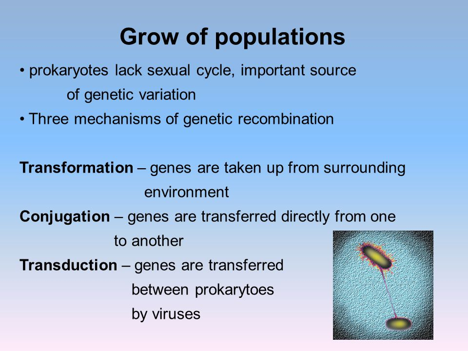 Grow of populations prokaryotes lack sexual cycle, important source of genetic variation Three mechanisms of genetic recombination Transformation – ge