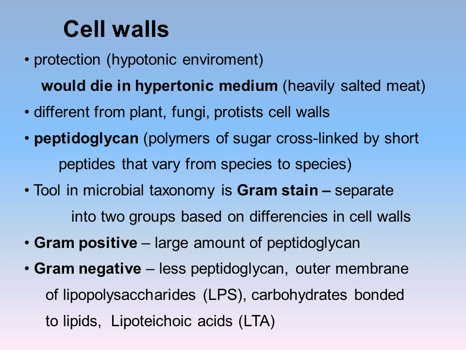 Cell walls protection (hypotonic enviroment) would die in hypertonic medium (heavily salted meat) different from plant, fungi, protists cell walls pep