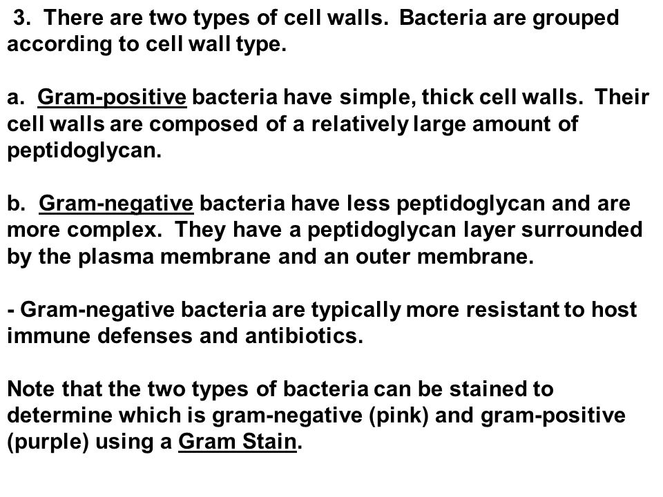 3. There are two types of cell walls. Bacteria are grouped according to cell wall type.