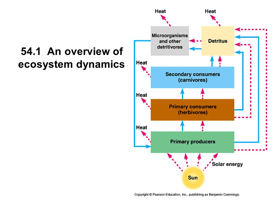 54.1 An overview of ecosystem dynamics