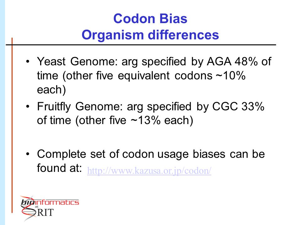 Codon Bias Organism differences Yeast Genome: arg specified by AGA 48% of time (other five equivalent codons ~10% each) Fruitfly Genome: arg specified