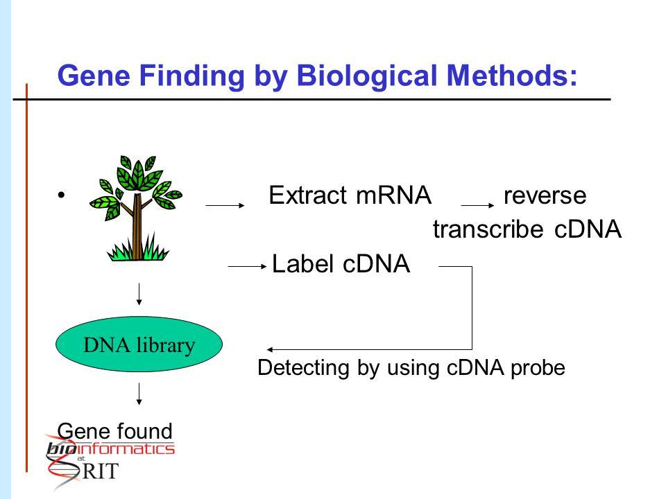 What do Prokaryotic Genes look like.