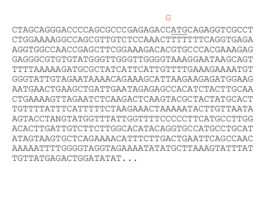 Codon Bias Gene Differences GAL4ADH1 GlyGGG0.210 GlyGGA0.170 GlyGGT0.380.93 GlyGGC0.240.07 Slide modified from: http://biology.uky.edu/520/Lecture/lect8/lect8Notes.ppt