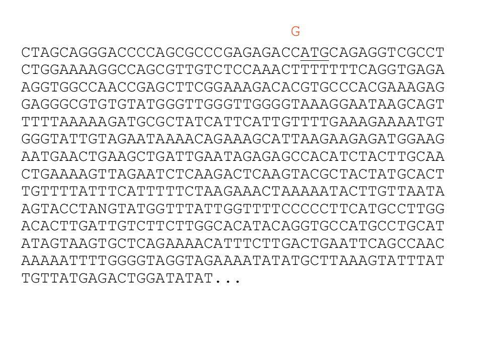 Types of Genes Protein coding –most genes RNA genes –rRNA –tRNA –snRNA (small nuclear RNA) –snoRNA (small nucleolar RNA)