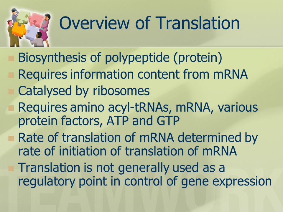 Overview of Translation Biosynthesis of polypeptide (protein) Requires information content from mRNA Catalysed by ribosomes Requires amino acyl-tRNAs, mRNA, various protein factors, ATP and GTP Rate of translation of mRNA determined by rate of initiation of translation of mRNA Translation is not generally used as a regulatory point in control of gene expression