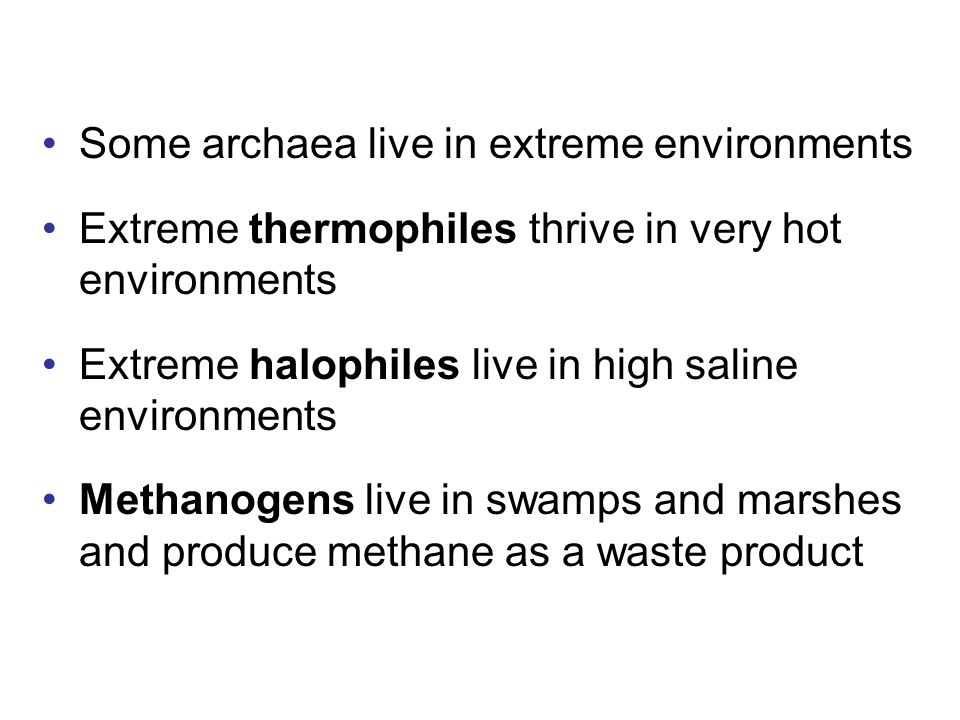 Some archaea live in extreme environments Extreme thermophiles thrive in very hot environments Extreme halophiles live in high saline environments Methanogens live in swamps and marshes and produce methane as a waste product