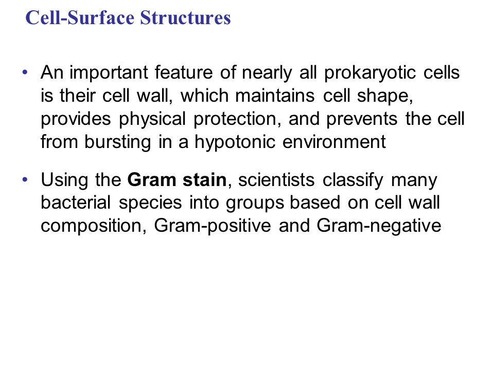 Cell-Surface Structures An important feature of nearly all prokaryotic cells is their cell wall, which maintains cell shape, provides physical protection, and prevents the cell from bursting in a hypotonic environment Using the Gram stain, scientists classify many bacterial species into groups based on cell wall composition, Gram-positive and Gram-negative