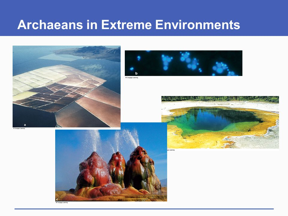 Archaeans in Extreme Environments