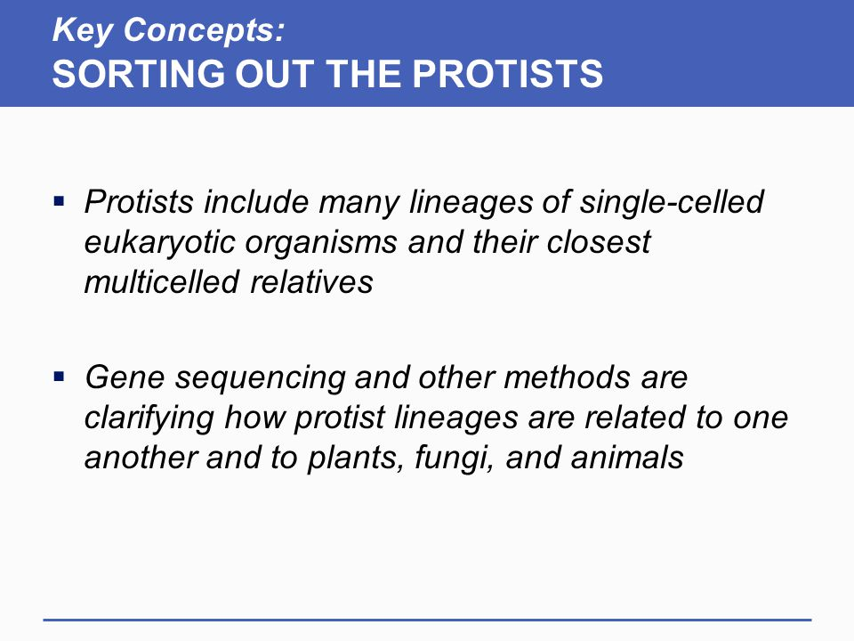 Key Concepts: SORTING OUT THE PROTISTS  Protists include many lineages of single-celled eukaryotic organisms and their closest multicelled relatives  Gene sequencing and other methods are clarifying how protist lineages are related to one another and to plants, fungi, and animals