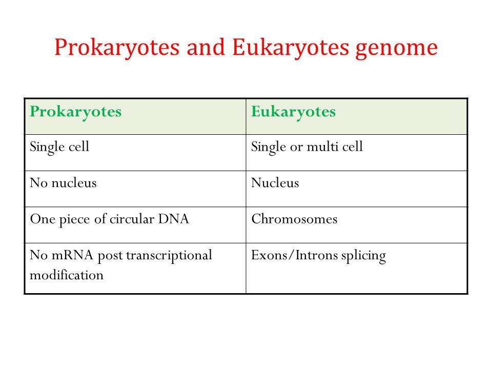 Prokaryotes and Eukaryotes genome ProkaryotesEukaryotes Single cellSingle or multi cell No nucleusNucleus One piece of circular DNAChromosomes No mRNA