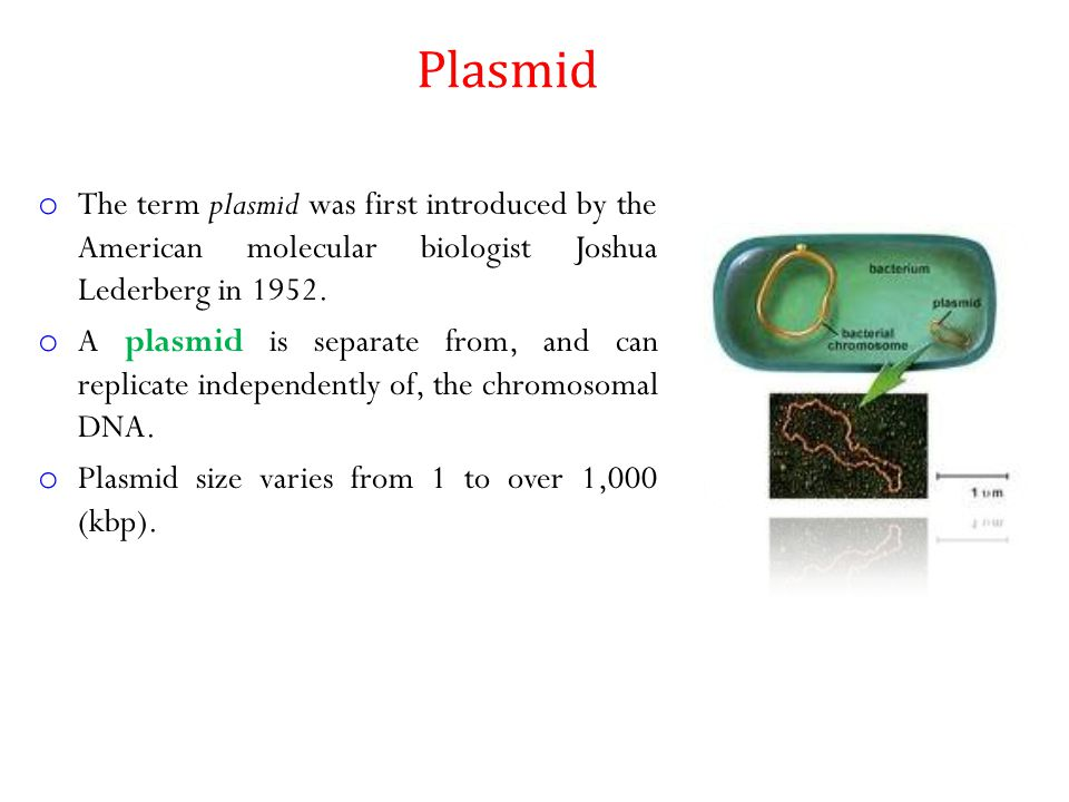 o The term plasmid was first introduced by the American molecular biologist Joshua Lederberg in 1952. o A plasmid is separate from, and can replicate