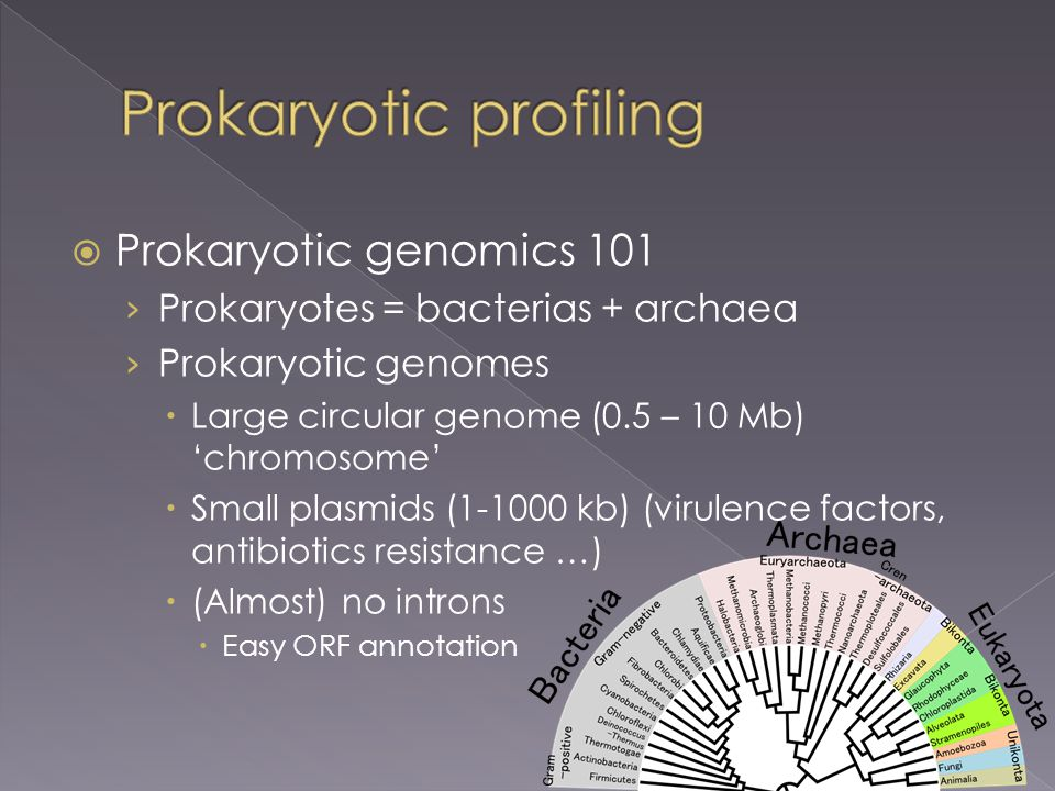  Prokaryotic genomics 101 › Prokaryotes = bacterias + archaea › Prokaryotic genomes  Large circular genome (0.5 – 10 Mb) 'chromosome'  Small plasmids (1-1000 kb) (virulence factors, antibiotics resistance …)  (Almost) no introns  Easy ORF annotation
