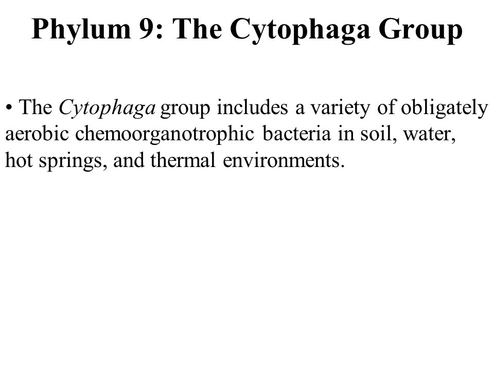 Phylum 9: The Cytophaga Group The Cytophaga group includes a variety of obligately aerobic chemoorganotrophic bacteria in soil, water, hot springs, and thermal environments.