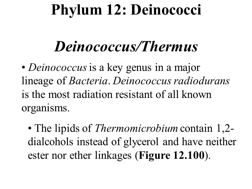 Phylum 12: Deinococci Deinococcus/Thermus Deinococcus is a key genus in a major lineage of Bacteria.