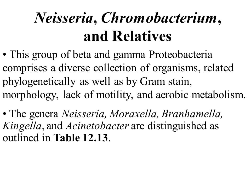 Neisseria, Chromobacterium, and Relatives This group of beta and gamma Proteobacteria comprises a diverse collection of organisms, related phylogenetically as well as by Gram stain, morphology, lack of motility, and aerobic metabolism.