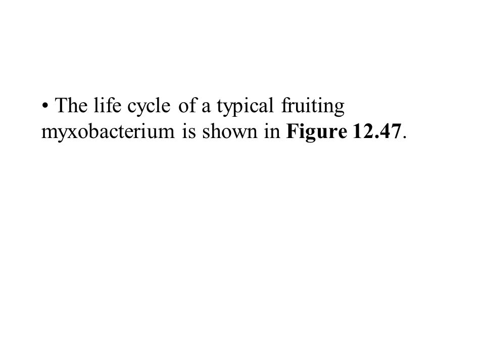 The life cycle of a typical fruiting myxobacterium is shown in Figure 12.47.